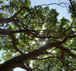 Ayurveda meditation, online, ayurveda teachings, ayurveda course, nature, athens
